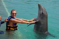 Grand Cayman Dolphin Swim Adventure