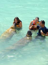 Manatee Encounter in Cozumel at Chankanaab Beach Adventure Park