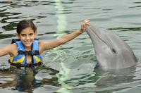 Puerto Aventuras Dolphin Encounter