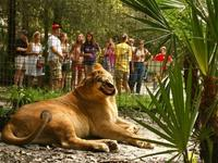 Feed the Big Cats