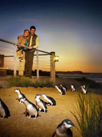 Phillip Island 3 Park Pass: Penguin Parade, Koala Conservation Centre and Penguin Parade, Koala ConservationHeritage Farm