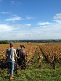 Small-Group Burgundy Wine and Cheese Tasting Half-Day Tour from Dijon