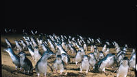 Full-Day Penguin Parade and Melbourne City Tour From Melbourne