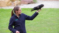 Healesville Sanctuary with Winery Lunch Day Tour