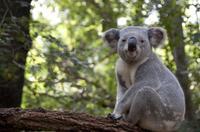 Melbourne Super Saver: City Sightseeing Tour plus Phillip Island Penguin Parade