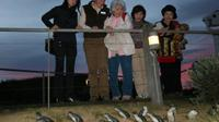 Penguin Parade with Moonlit Sanctuary and Churchill Island From Melbourne