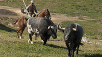 Andalusian Horse Farm Visit in Cordoba