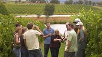 Two Wine Cellar Visit and Tasting in La Rioja