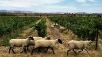 Private Tour to Sonoma and Napa Wine Country