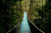 Hanging Bridges Walking Tour in Arenal*