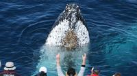 Gold Coast Whale Watching Experience