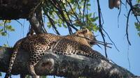Nairobi National Park Private Day Tour