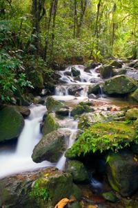 El Yunque Rainforest Half-Day Trip from San Juan*