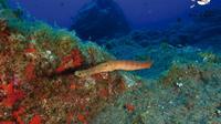 Half-Day PADI Fish Identification Course in Tenerife