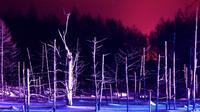 Hokkaido Winter Tour! Visit Asahiyama Zoo, Aoi-Ike and Shirohige Falls Light Up!
