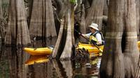 Econlockhatchee River Kayak Tour