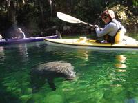 Manatee Kayak Tour at Blue Springs State Park