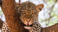 3 Days Amboseli & Tsavo West National Park Safari From Nairobi
