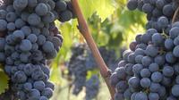 Chianti Organic Vineyards Grand Tour in Private Luxury Van from Florence-Tu