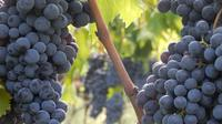 Food and Wine Tour in Chianti Landscape