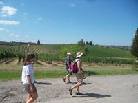 Tuscany Hiking Tour from Florence Including Wine Tasting and Lunch