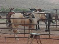 Wild West Sunset Horseback Ride with Dinner