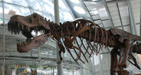 Viator Exclusive: California Academy of Sciences Early-Access Admission