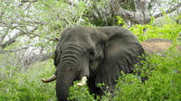 Kissama National Park Overnight Tour from Luanda: 2 days 1 night
