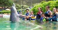 Swim with the Dolphins at Sea Life Park in Oahu