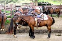 Horseback Adventure Package at Kualoa Ranch on Oahu