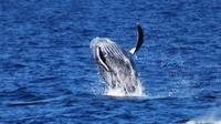 Sail With the Whales from Anaeho'omalu Bay