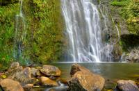 East Maui Waterfalls and Rainforest Hike