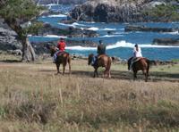 Maui Horseback-Riding Tour with Optional BBQ Lunch