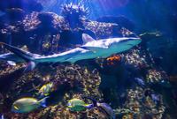 Shark Reef at Mandalay Bay Hotel and Casino