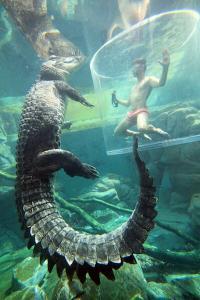 Cage of Death at Darwin's Crocosaurus Cove