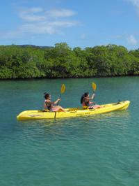 St Thomas Shore Excursion: Mangrove Lagoon Kayak and Snorkel Tour
