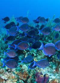 Semi-Submarine Cruise at Coral World Ocean Park in St Thomas