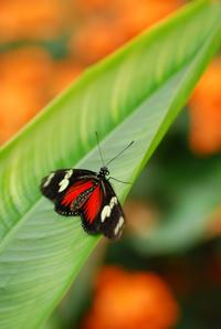St Thomas Butterfly Garden Tour with Optional Coral World Ocean Park Admission