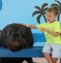 St Thomas Shore Excursion: Sea Lion Encounter at Coral World Adventure Park