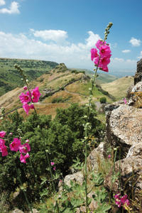 Golan Heights Day Trip from Jerusalem