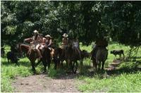 Ixtapa Shore Excursion: Horseback Riding on Zihuatanejo Bay