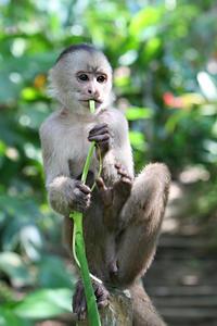 3-Day Amazon Jungle Tour at Inkaterra Reserva Amazónica
