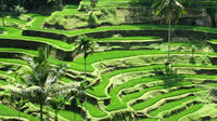 Private Tour : Ubud and Kintamani Volcano Tour Full-day