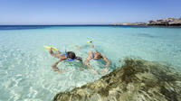 Rottnest Island Tour From Perth or Fremantle including Snorkeling Tour
