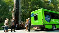 Excursió a lestiu: excursió dun dia a les cascades Whistler i Shannon des de Vancouver