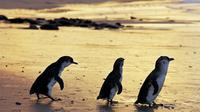 Melbourne Super Saver: Great Ocean Road and Phillip Island plus Melbourne Attraction Pass