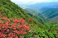 Private Tour: Yao Mountain and Tea Plantation from Guilin