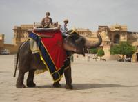 Elephant Ride to Amber Fort*