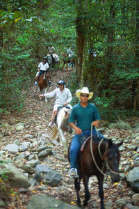 Horse Riding Tour from Cairns