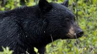 5.5-Hour Jasper Wildlife and Waterfalls Tour with Maligne Lake Cruise from Jasper